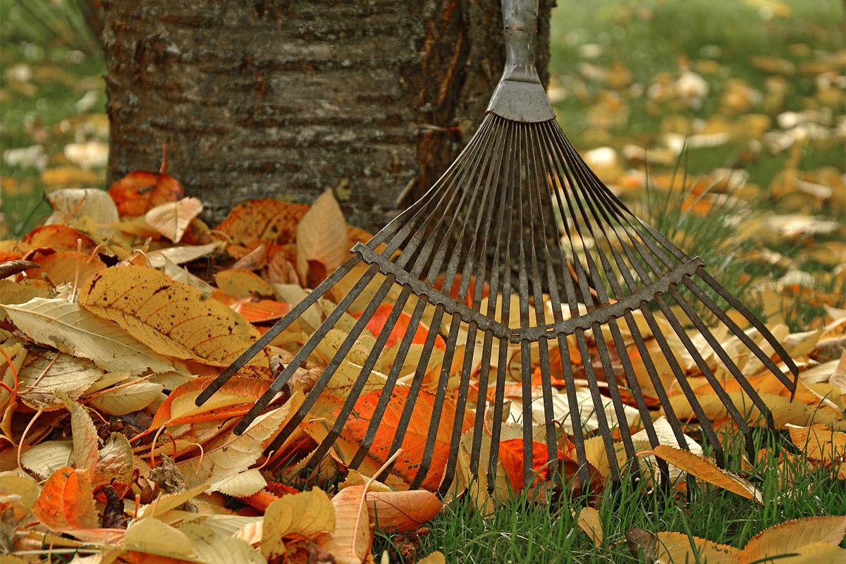 Herbstlaub ist kein Abfallprodukt, sondern gehört in den natürlichen Kreislauf der Natur.