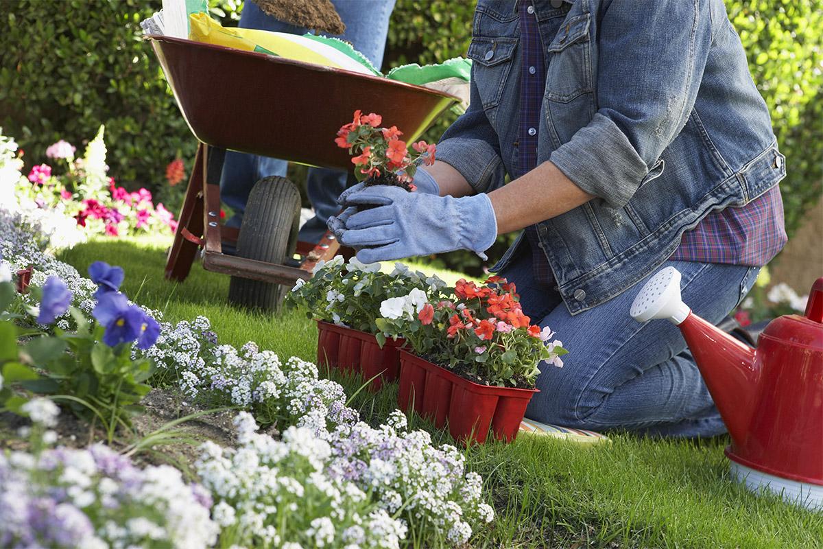 Der naturbelassene Garten wird nach ökologischen Prinzipien angelegt.
