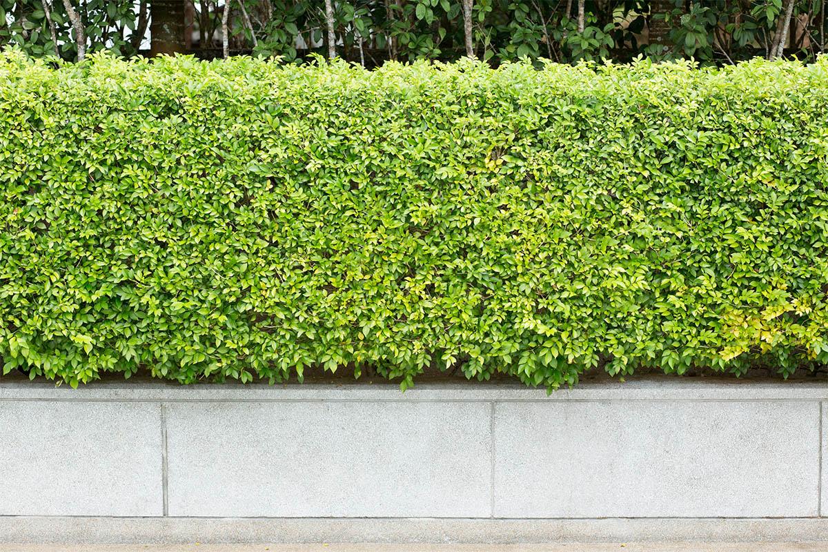 Werden Pflanzen im Herbst eingesetzt, können sich diese an den neuen Standort gewöhnen.
